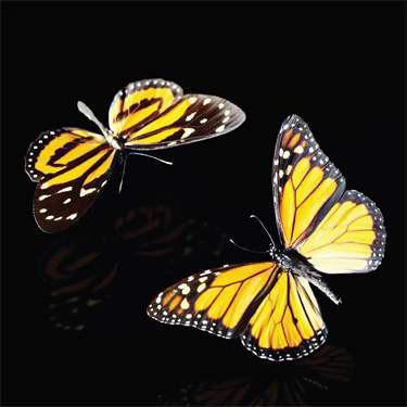 Handelshaus Papillonmedia