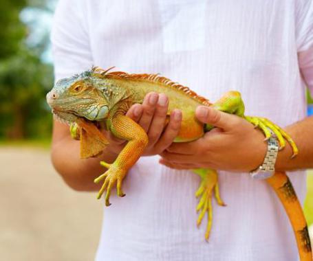 Ein Reptil als Haustier? Warum eigentlich nicht!