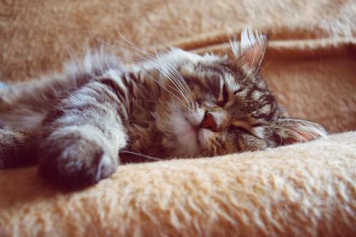 Zehn Tipps für einen besseren Schlaf