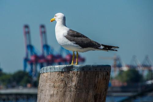 In Hamburg gibt es viel zu entdecken