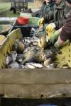 Fischzucht Kreutziger